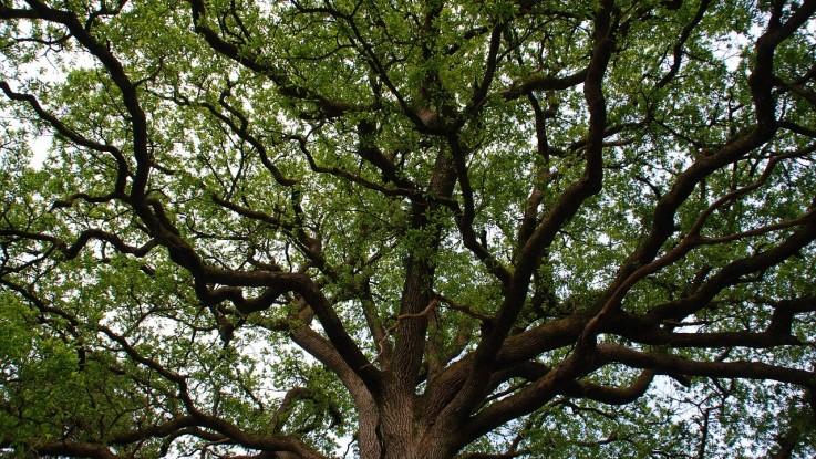 Les 9 arbres les plus prestigieux d'Europe